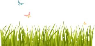 Fresh grass. Fresh green grass and butterflies Royalty Free Stock Image