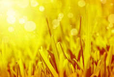 Abstract grass background Royalty Free Stock Photography