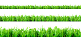 Fresh grass Stock Photos