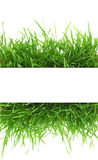 Fresh grass, blank banner isolated on white Stock Photo
