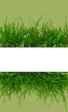 Fresh grass, blank white horizontal banner Stock Images