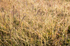 Fresh grass blurry background as morning sunlight Royalty Free Stock Photos