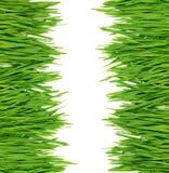 Fresh grass border Stock Photos