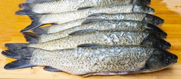 Fresh grass carp Royalty Free Stock Image