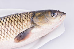 Fresh grass carp in the dish Royalty Free Stock Image