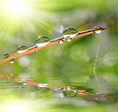 Fresh grass with dew drop closeup. Stock Images