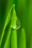 Fresh grass with dew drops Stock Photos