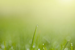 Fresh grass with dew drops Stock Photography