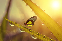 Fresh grass with dew drops and butterfly Stock Image