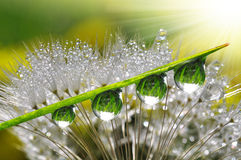 Dew drops. Fresh grass with dew drops close up Royalty Free Stock Image