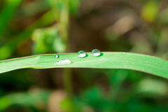 Fresh grass with dew drops close up Stock Image
