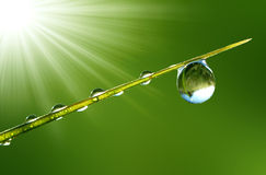 Fresh grass with dew drops close up. Grass with a drop of water and sun Royalty Free Stock Photography