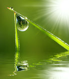 Fresh grass with dew drops close up. Grass with drops of water with sun rays Stock Photo