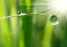 Fresh grass with dew drops close up Stock Photos
