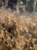 Fresh grass with dew drops close up, nature Royalty Free Stock Photos
