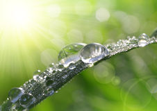 Fresh grass with dew drops closeup Stock Images