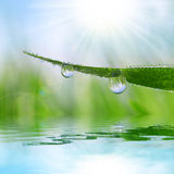 Fresh grass with dew drops closeup. Stock Image
