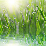 Fresh grass with dew drops closeup. Stock Photos