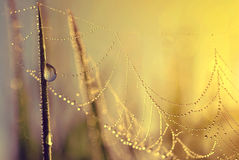 Fresh grass with dew drops and spider web Stock Images