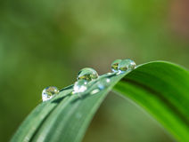 Fresh grass with dew drops and Sun beams Royalty Free Stock Images