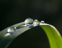 Fresh grass with dew drops and Sun beams Stock Images