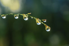 Fresh grass with dew drops and Sun beams Royalty Free Stock Photography