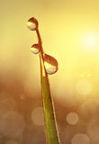 Fresh grass with dew drops at sunrise Stock Photo