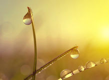 Fresh grass with dew drops at sunrise. Stock Photo