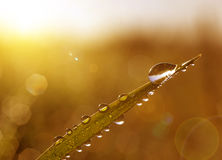 Fresh grass with dew drops at sunrise. Stock Images