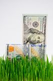 Fresh grass and dollars Royalty Free Stock Photos