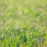Fresh Grass with drops of dew - amazing defocused bokeh backgrou Stock Photo