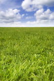 Fresh grass field Royalty Free Stock Photo