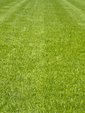 Fresh Grass Field Stock Image