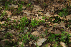 Fresh grass on the forest floor. At midday Royalty Free Stock Photos