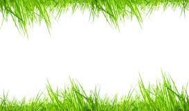 Fresh grass frame Royalty Free Stock Image