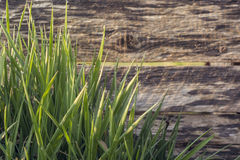 Fresh grass growing by wooden fence Stock Images