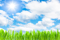 Fresh grass growth on cloud sunny sky Royalty Free Stock Images