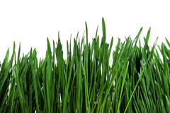 Fresh Grass Isolated Stock Photography