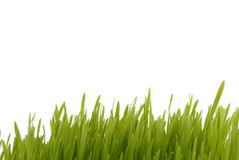 Fresh grass isolated on white Royalty Free Stock Images