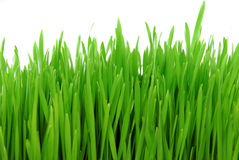 Fresh grass isolated on white Royalty Free Stock Image