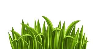 Fresh grass stock illustration