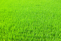 Fresh Grass land Royalty Free Stock Photos