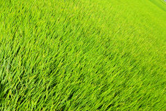 Fresh Grass land Stock Photo