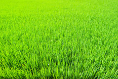 Fresh Grass land Stock Photos