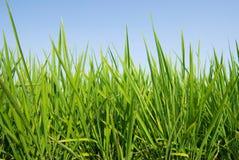 Fresh Grass land under blue sky. Nature concept Stock Photos