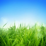 Fresh Grass Stock Image
