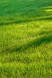 Fresh grass lawn Stock Photography