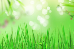 Fresh grass and light reflect in morning Royalty Free Stock Photo