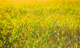 Fresh grass on meadow Stock Image