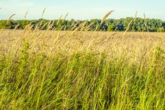 Fresh grass in the meadow Royalty Free Stock Photos